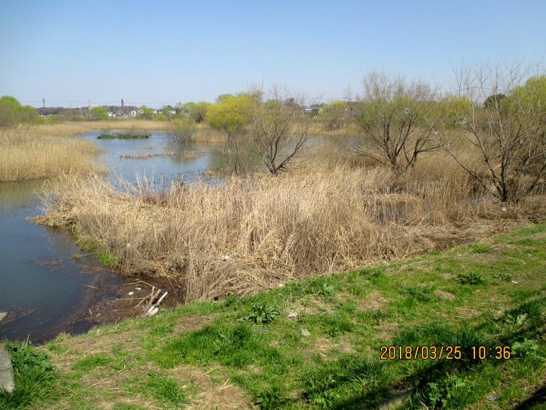 ⑮見沼田んぼ湿地帯