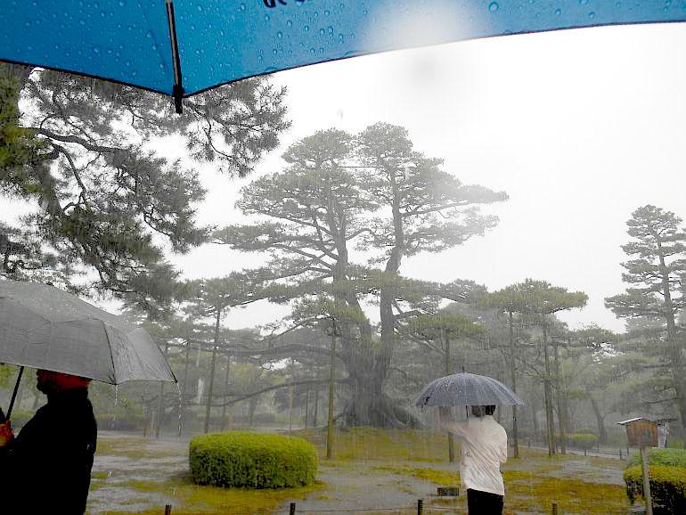 大雨の中の兼六園観光10分(7月1日昼)